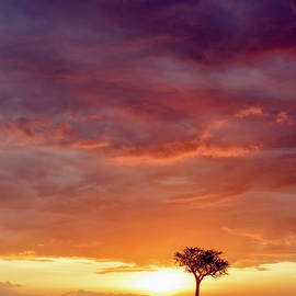 African sunset skies vertical by Murray Rudd