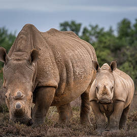 African White Rhino - Mother and Baby Rhino by Kim Paffen - Travel and Wildlife Photography