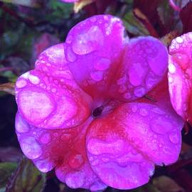 After the Rain by Shannon Taggart