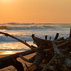 After The Storm by Dianne Cowen