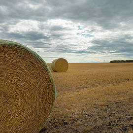 After the wheat harvest by Karen Rispin