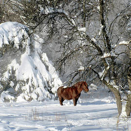 After The Winter Storm by Patricia Keller