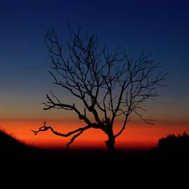 Afterlife by Adam Matthews