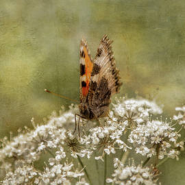 Aglaia the orange butterfly on the flower  by Rita Di Lalla