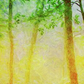 Aglow in the Fog ap by Dan Carmichael
