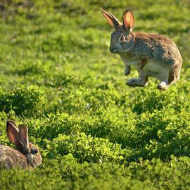 Airborne Bunny