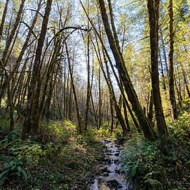 Alder Creek by Steven Clark