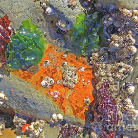 Algae Abstract by Becky Miller