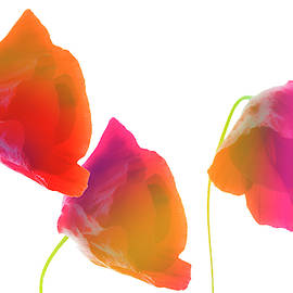 All garden colors by larisa Fedotova