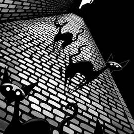 Alley Cats  by Andrew Hitchen