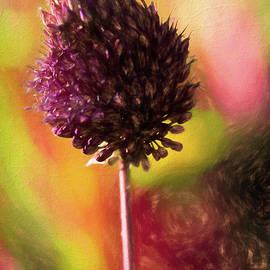 Allium by Diane Schuster