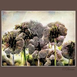 Allium Dreams by CJ Anderson