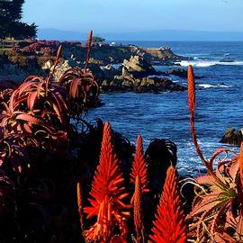 Aloe On The Pacific  by Michael Klahr