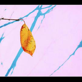 Alone...  -  7098 by Panos Pliassas