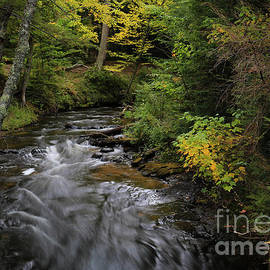 Along An Autumn Stream by Jane Tomlin