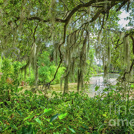 Along the Lagoon in City Park, NOLA by Kathleen K Parker