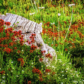 Alpine Garden by Bette Devine