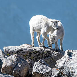 Alpine Kids by Jennifer Jenson