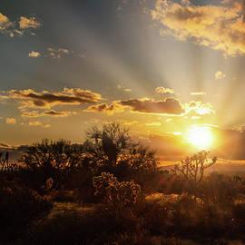 Always Chasing The Desert Light  by Saija Lehtonen