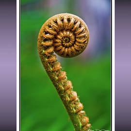 'Ama'u unfurls - an 'Ama'u fern is just starting out by Rob DeCamp