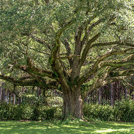 Amazing Canopy