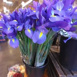 Amazing Irises by Charlotte Gray