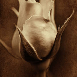 Amber Rose Bud Flower by Jennie Marie Schell