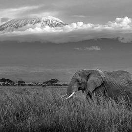 Amboseli Elephant by Eric Albright