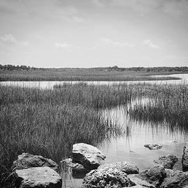 Amelia Island  Florida Marsh by Rudy Umans