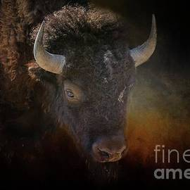 American Buffalo by Eva Lechner