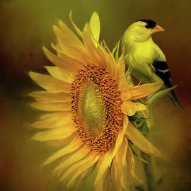 American Goldfinch Perched On Sunflower by Diana Van Tankeren