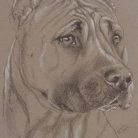 American Staffordshire Terrier in Pencil by Barbara Keith
