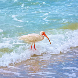 American White Ibis by Donna Kennedy