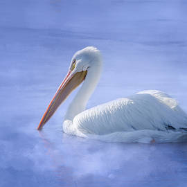 American White Pelican Daydreaming by Debra Martz
