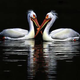 American White Pelicans by Shixing Wen