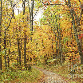 Amidst the Fall Colors of the Blue Ridge in Shenandoah National Park by Maili Page