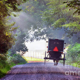 Amish Buggy in Early Morning Light by David Arment