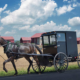 Amish Horse and Buggy, Pennsylvania 2012 by Michael Chiabaudo