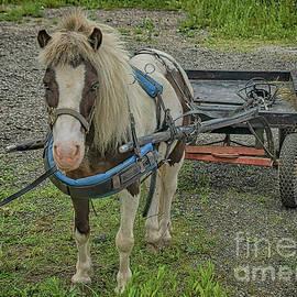 Amish Pony Cart by Janice Pariza
