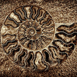 Ammonite Fossil - 5060 by Paul W Faust - Impressions of Light