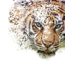 Amur Tiger Art by Darren Wilkes