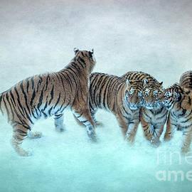 Amur Tiger Family by Robert Murray