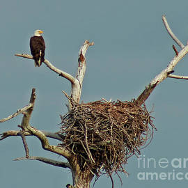An Eagle and Its Nest by Maili Page
