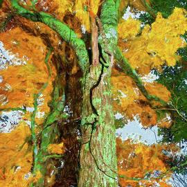 An Orange Autumn ap by Dan Carmichael