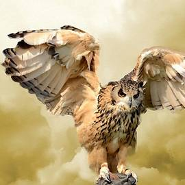 An Owl Landing With Cloud Background L B