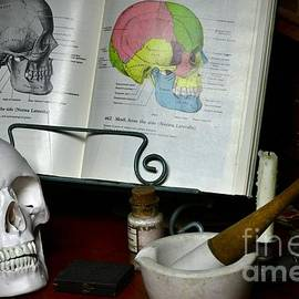 Anatomy of the Human Skull Side View by Paul Ward