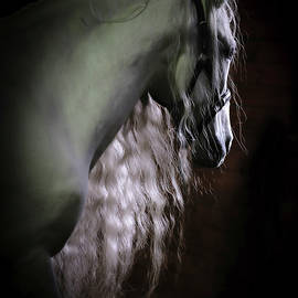 Andalusian's Shadow by Athena Mckinzie