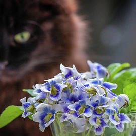 Andy and violets  by Lyudmila Prokopenko