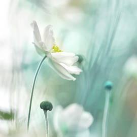 Anemone in Blue by Corinne Welp