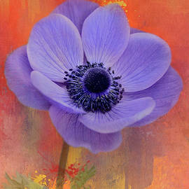Anemone on Colorful Texture by Isabela and Skender Cocoli